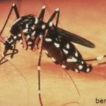 Nguyên nhân, triệu chứng bệnh sốt xuất huyết, nguyen nhan, trieu chung benh sot xuat huyet