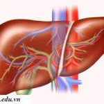 4 con đường lây truyền bệnh viêm gan B thường gặp